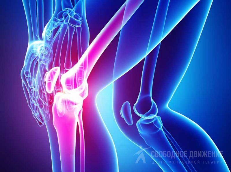 Синовиальная оболочка коленного сустава. Завороты коленного сустава. Завороты синовиальной оболочки коленного сустава. Синовиальные сумки коленного сустава.